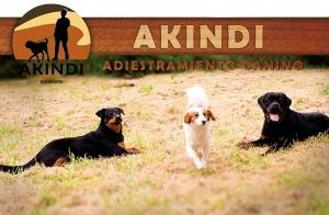 Modificación de conducta canino