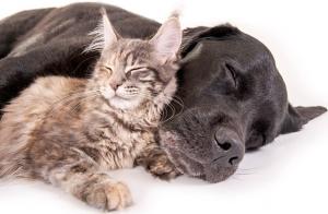 Consulta Dermatológica perro o gato